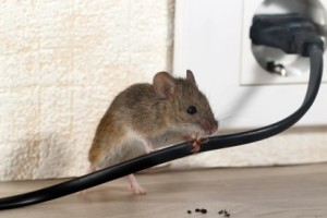 Mice Control, Pest Control in East Sheen, SW14. Call Now 020 8166 9746
